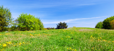 sky and grass: Panorama of summer meadow with green grass, trees and flowers. Blue sky