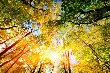 Sun shining through summer, autumn trees and colorful leaves. Nature