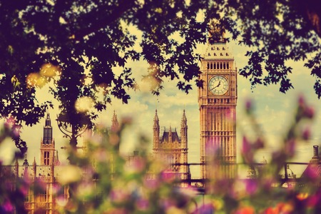 kingdom: Big Ben, the Palace of Westminster in London, UK. View from a public garden with beautiful flowers and trees at sunny spring, summer day.
