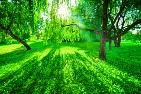 summer nature: Green summer park. Sun shining through trees, leaves. Nature theme