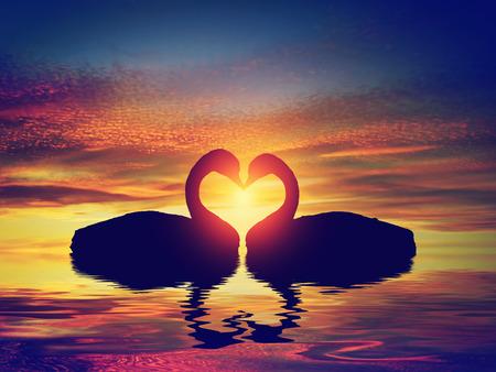 夕暮れハート形を作る 2 つの白鳥。バレンタインの日ロマンチックな概念