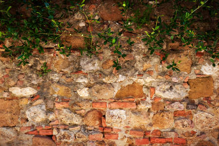 geen: Ancient, retro brick, stone wall with ivy. Vintage, grunge background Stock Photo