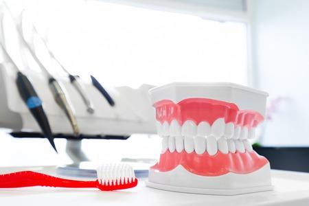 odontologa: Limpie los dientes de la dentadura, el modelo de la mandíbula dental y cepillo de dientes en el consultorio del dentista. Odontología