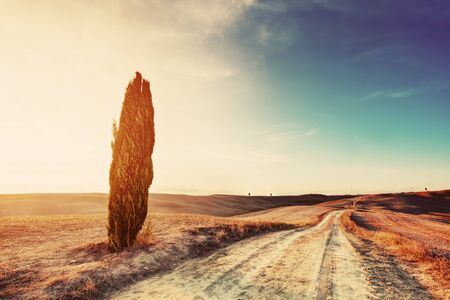 val dorcia: Cypress tree and field road in Tuscany, Italy at sunset. Tuscan landscape, Val dOrcia region. Vintage