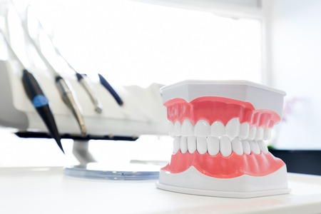 scaler: Clean teeth denture, dental jaw model in dentists office. Dentistry instruments and equipment in the background