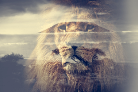 ライオンとキリマンジャロ サバンナ風景の二重露光。ヴィンテージ