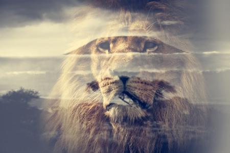 Dubbele belichting van de leeuw en de berg Kilimanjaro savanne landschap. Wijnoogst