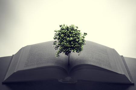 Tree growing from an open book. Education, imagination, creativity concept.