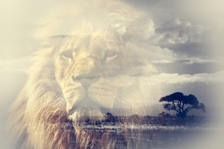 Double exposure of lion and Mount Kilimanjaro savanna landscape. Vintage Reklamní fotografie