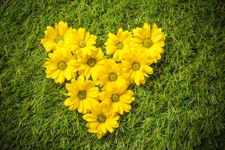 natural love: Fresh spring flowers in heart shape on grass. Natural love