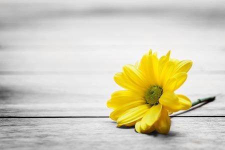 Verse lente madeliefje bloem op rustieke hout. Plaats voor tekst op Valentijnsdag, Moederdag, enz. Vintage