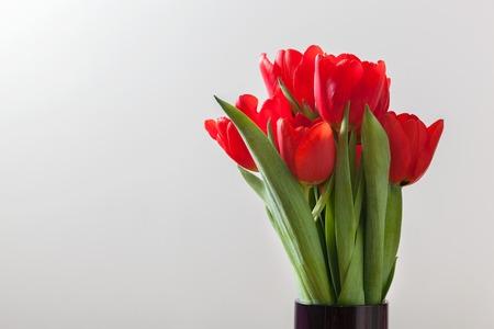 Rote Tulpe blüht Blumenstrauß auf grauem Hintergrund. Natürliche Feder oder zum Valentinstag Thema.