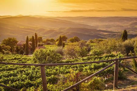 chianti: Vineyard wonderful landscape in Tuscany, Italy. Wine farm at sunset