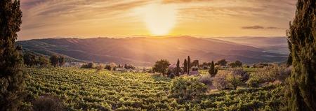 montalcino: Vineyard wonderful landscape panorama in Tuscany, Italy. Wine farm at sunset Stock Photo