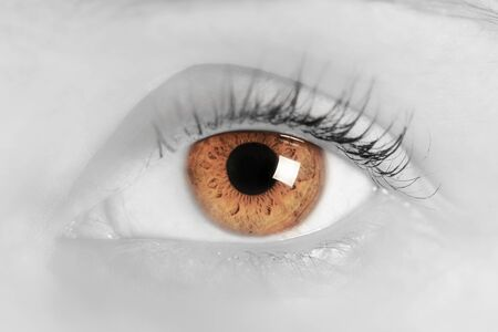 light brown eyes: Brown eye of a young woman. Close-up. Focus on iris and pupil. Black and white with blue.