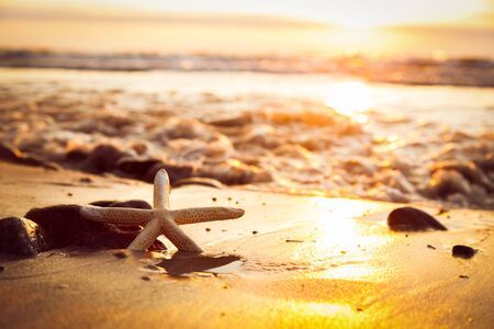 august: Starfish on the beach at sunset. Sun shining on the sea, calm waves, travel, summer holidays concept.