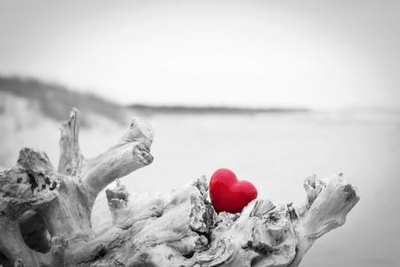 Rotes Herz in einem Baumstamm am Strand. Romantische Symbol der Liebe, Valentinstag. Schwarz-Weiß gegen Rot. Standard-Bild