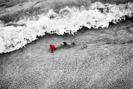 romantic love: Waves washing away a red rose from the beach. Concept of romantic love, romance, but may also symbolize a loss, melancholy, memory of the past etc. Color against black and white