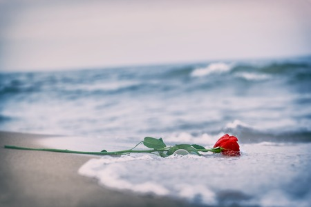 Waves washing away a red rose from the beach. Concept of romantic love, romance, but may also symbolize a loss, melancholy, memory of the past etc. Vintage 스톡 콘텐츠