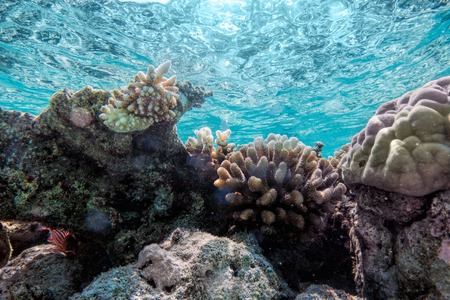 turquoise water: Underwater coral reef and fish in Indian Ocean, Maldives. Tropical clear turquoise water Stock Photo