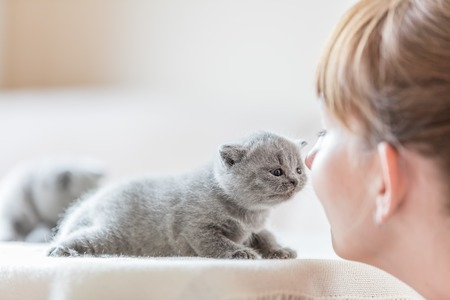 Cute fluffy kitten and woman rubbing noses. Human and animal bonding together. British shorthair cat.