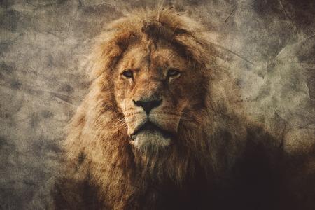 Majestätischer Löwe in einem Weinleseporträt. König des Dschungels. Gefährliche Tiere und wild lebende Tiere.