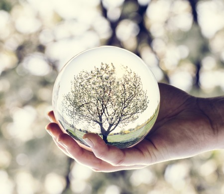 A tree reflection in a glass ball held by a woman. Nature. Saving the Earth. Stock Photo
