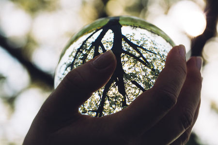 Womans hand holding a glass sphere and a tree reflecting in it. Mother Nature. Stock Photo