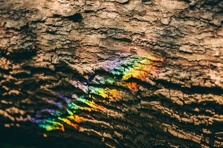 Colorful rainbow reflecting on a bark of a tree. Nature. Happiness. Save the Earth.