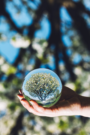 A tree and bright blue sky reflecting in a glass sphere held by a woman. Earth Day. Vertical image. Stock Photo