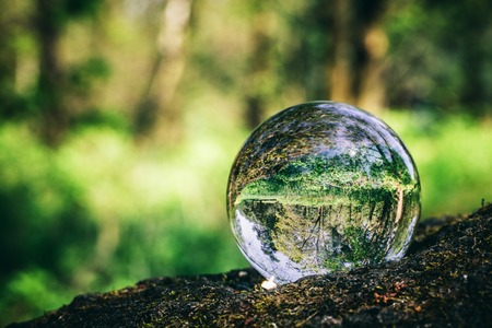 Crystal ball standing on a trunk, reflecting a forest. Environmental conservation. Earth Day. Stock Photo