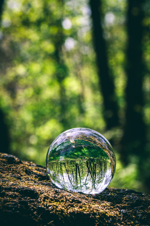 Glass sphere with forest reflection in it, standing on a tree. Natural environment. Save the Earth. Stock Photo