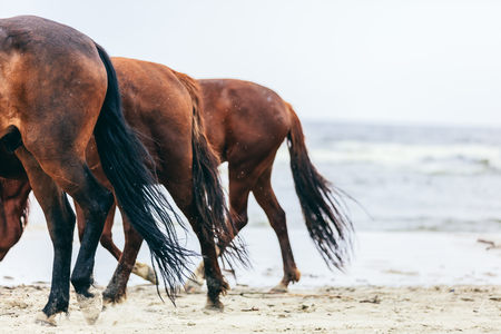 Three horse rumps in a row on the beach in a close up. Equine croups and tails.