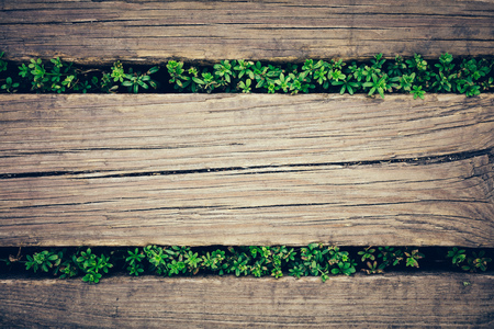 Old wooden planks with green plants peeking through. Close-up. Background. Stok Fotoğraf