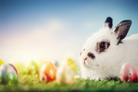 White rabbit and Easter eggs on spring background. Traditional Christian holiday, symbol of life.