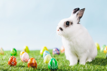 White bunny and Easter eggs on spring background. Traditional Christian holiday, symbol of life. Copyspace.