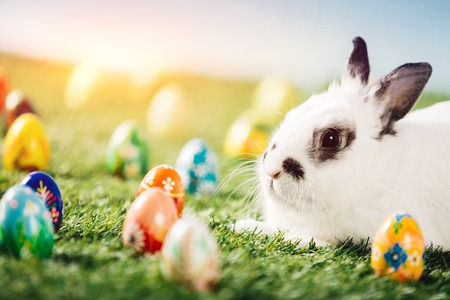 Bunny and colorful eggs on green meadow. Easter, Traditional Christian holiday, symbol of life.