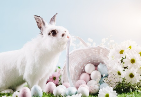 Funny rabbit and basket full of Easter eggs. Easter, spring, traditional Christian holiday.