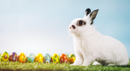 White rabbit and eggs on spring background. Easter, traditional spring holiday. Copyspace. Stock Photo