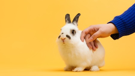Hand petting white bunny on yellow background. Domestic animal, furry pet. Copyspace.