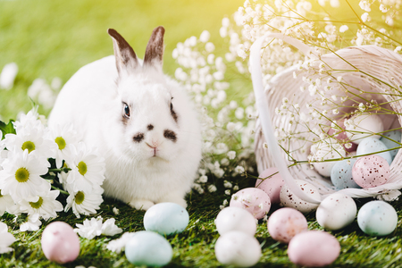 Rabbit sitting next to Easter decorations. Easter, traditional Christian holiday. Symbol of spring. Stock Photo