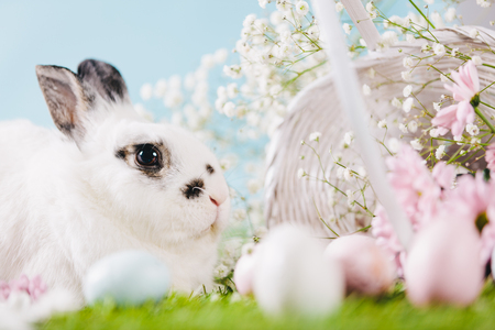 White rabbit and Easter decorations on spring background. Traditional Easter symbol, spring holiday.