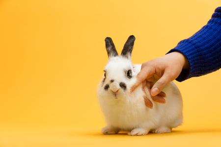 Womans hand petting white bunny. Domestic animal, furry pet. Symbol of spring. Copyspace.