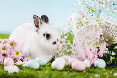 Bunny and Easter decorations on spring background. Christian symbols and traditions. Spring.