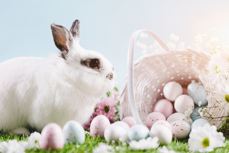 White bunny and Easter eggs and decorations on spring background. Traditional Christian holiday. Spring. Stock Photo