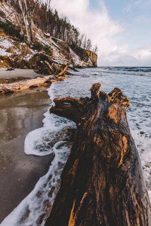 Fallen tree laying on a beach. Weather phenomenon, wild coastline. Seascape. Stock Photo