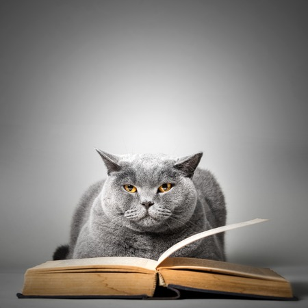 Funny cat reading book. Studying, learning, literature. British shorthair cat.