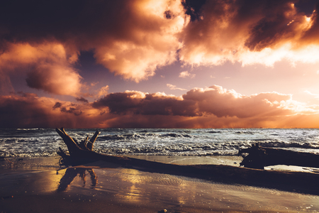 Seashore in the sunset after storm. Wild nature, beach and fallen tree. Cloudy dramatic sky.