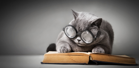 Funny cat in big glasses reading book. Studying, student, learning. British shorthair cat.