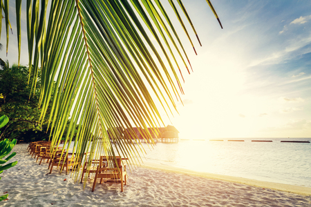 Tropical sandy beach on Maldives at sunset. Palm leaf and beach chairs. Tropical holiday destination.
